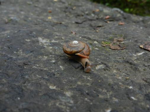 A snail we saw along the way