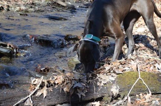 Checking out new spring scents by the creek on our hike