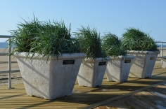 planters along the edge of the boardwalk