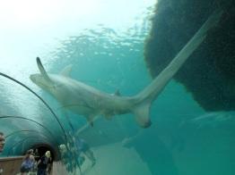 shark at an aquarium in the Bahamas. love the distortion