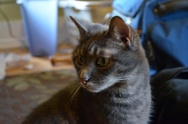 Abby the Ever Vigilant