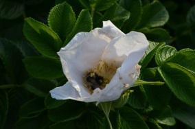 bud and bee