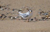 small bird looking at me