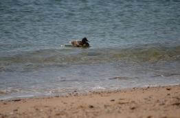 ocean duck floating