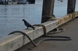 pigeon pier