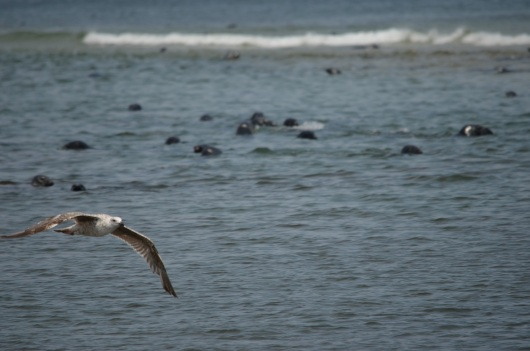 SeagullWithSeals
