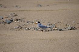 small bird left