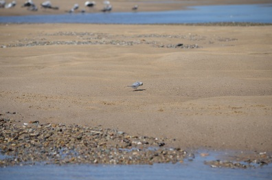 small bird sand