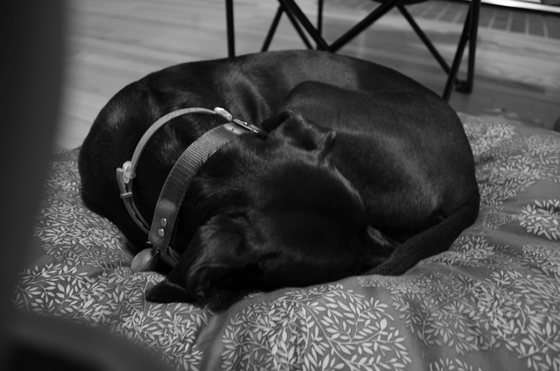seneca dog bed