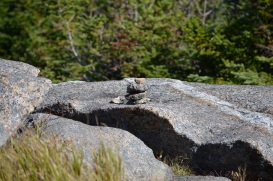 29 small cairn
