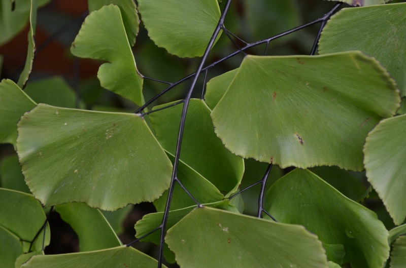 close up of leaves
