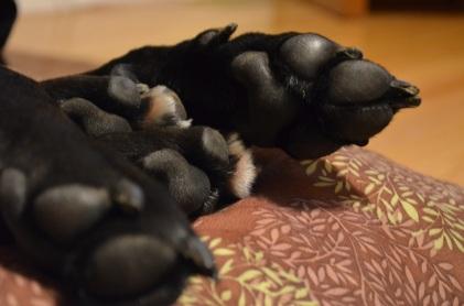 puppy paws!