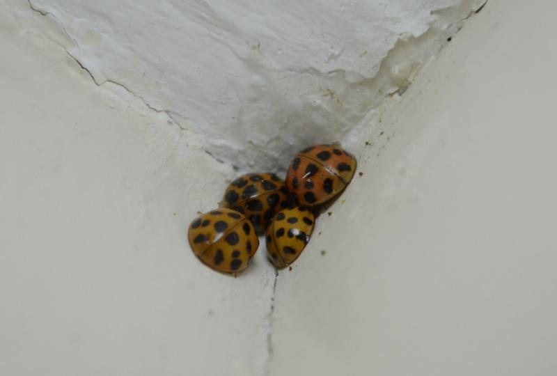 landbug cluster