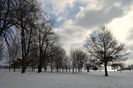 owasco trees snow