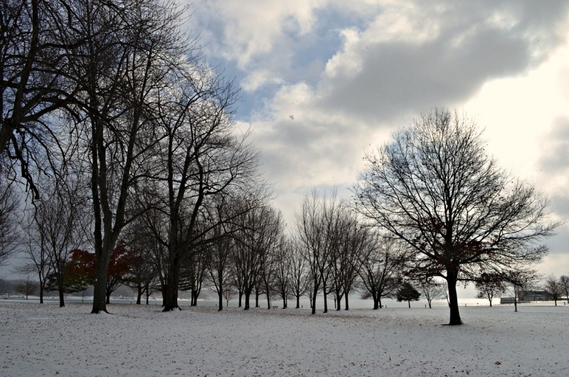 owasco trees snow