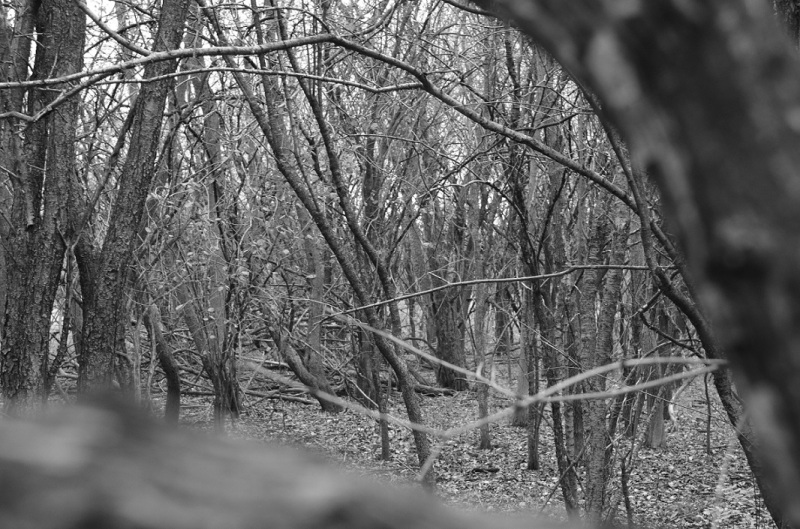scrubby wooded area BW
