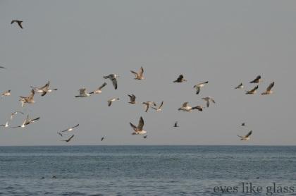 CC2015 birds
