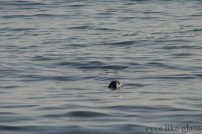 CC2015 single seal