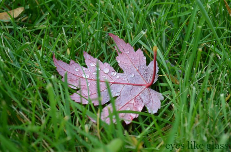 leaf in grass